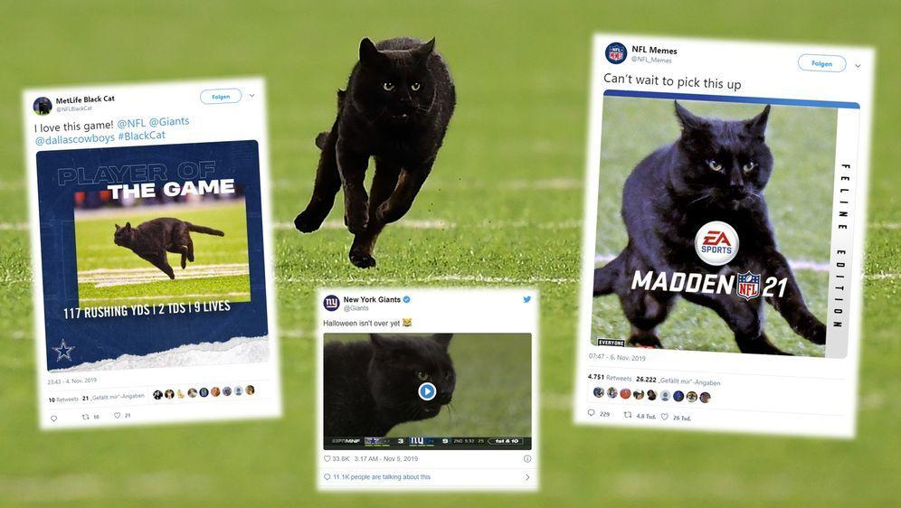 Die vermisste Katze, die das Monday Night Game crashte, wird zum viralen Int... - Bildquelle: imago/Twitter@NewYorkGiants/@NFLMemes/@MetLifeBlackCat