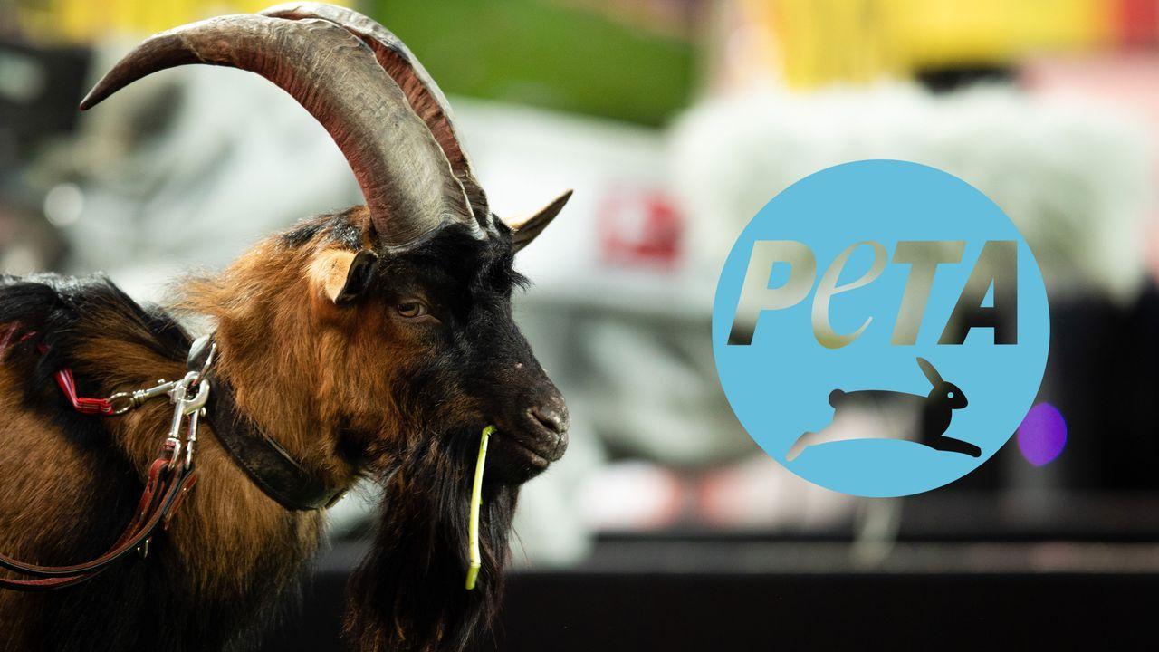 PETA will Verbot von Kölns Geißbock Hennes erwirken - Bildquelle: Imago Images