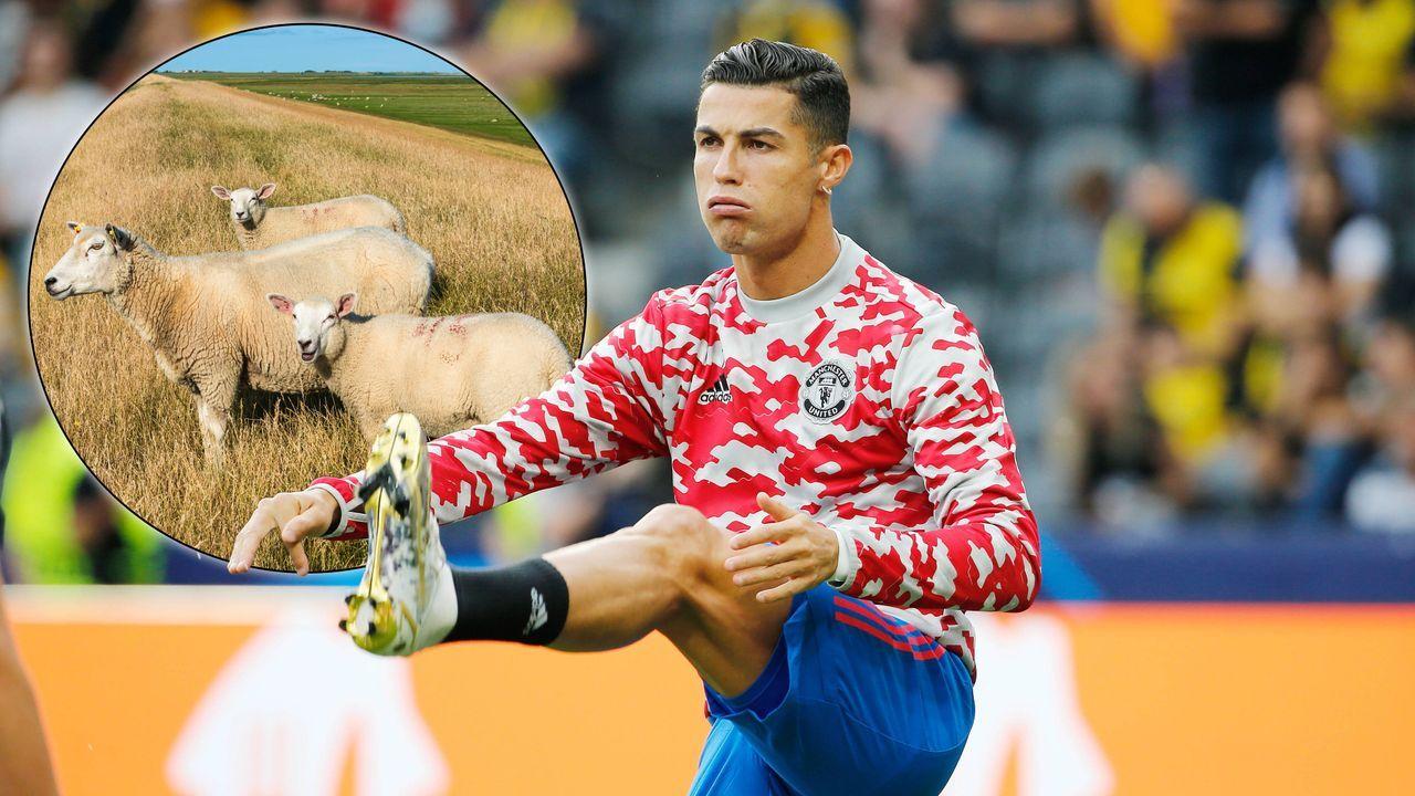 Schafe zu laut: Ronaldo zieht nach wenigen Tagen in Manchester um  - Bildquelle: Imago Images