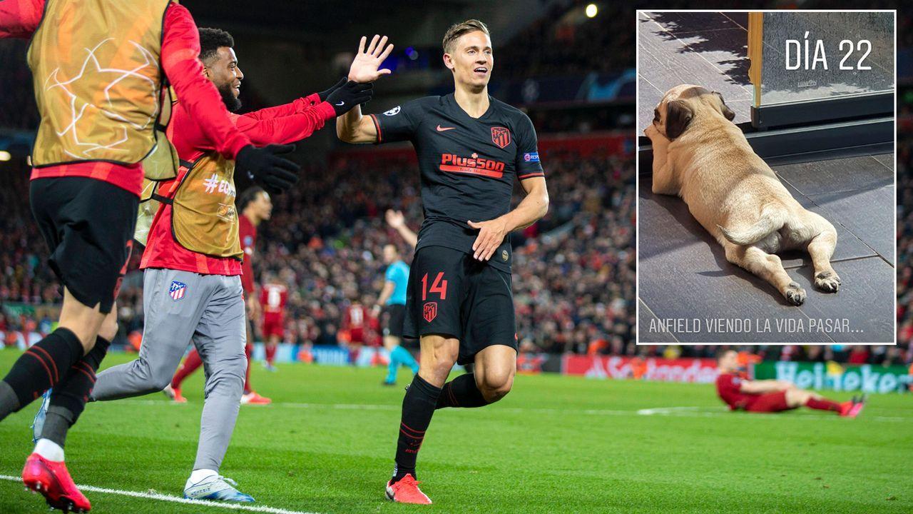 """""""Anfield"""": Atleticos Marcos Llorente benennt Hund nach Stadion von Liverpool - Bildquelle: Imago/instagram@marcosllorente"""