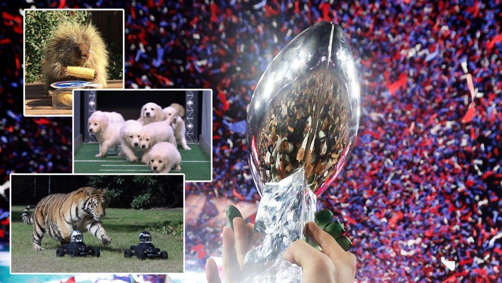 Wer gewinnt in diesem Jahr den Super Bowl? - Bildquelle: getty
