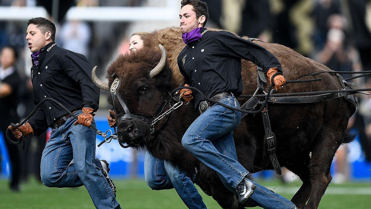 Ralphie the Buffalo (Colorado Buffaloes) - Bildquelle: 2018 Getty Images