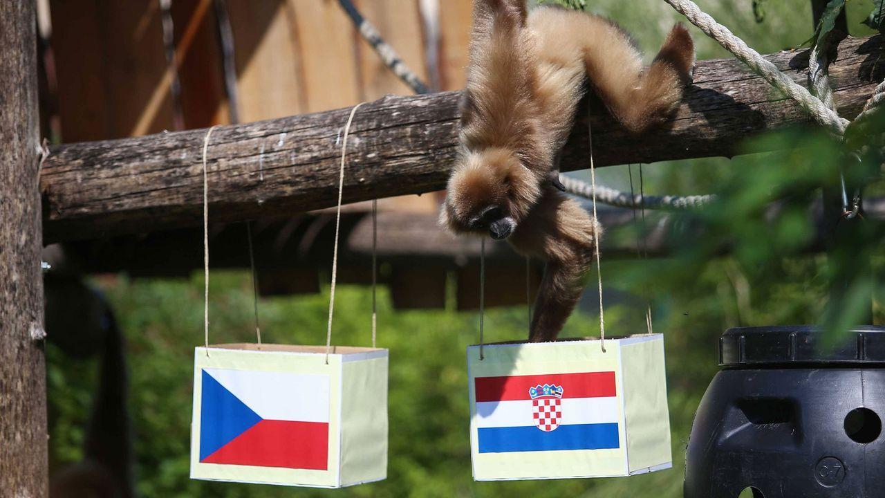 Die Affen sind los - Bildquelle: imago images/Pixsell