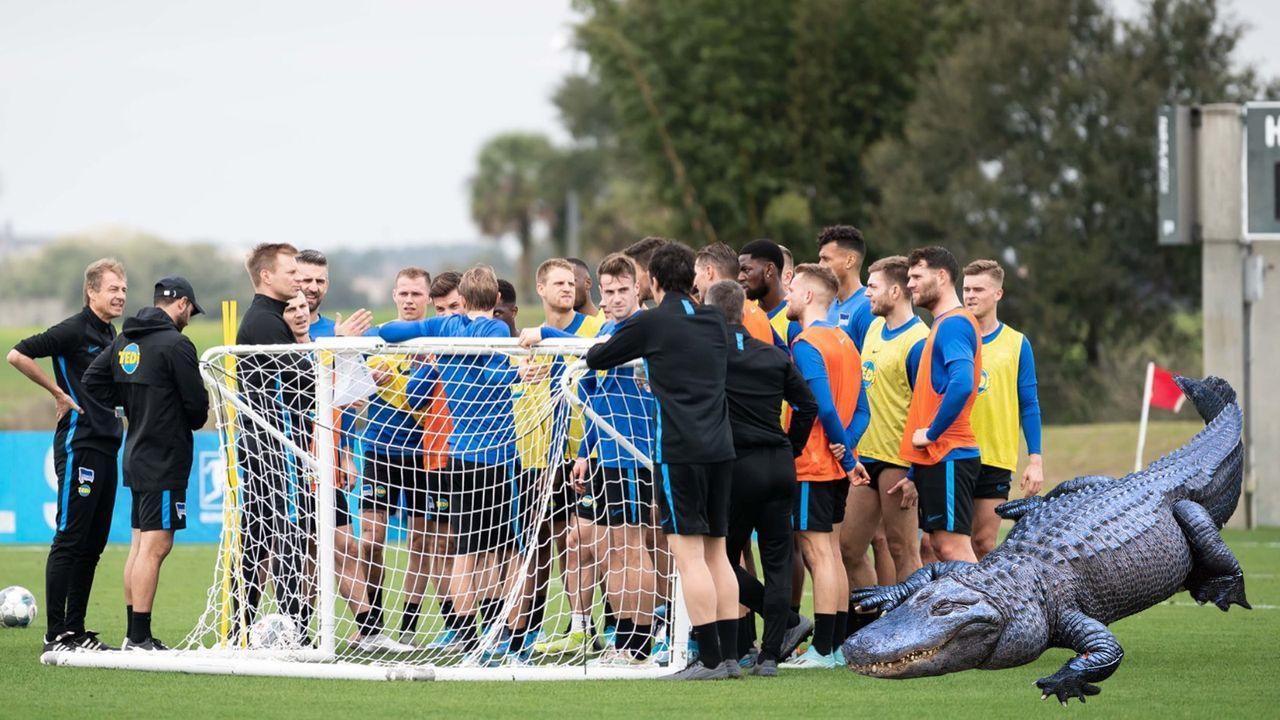 In Florida: Hertha BSC hat mit Alligator-Problemen zu kämpfen - Bildquelle: twitter@herthabsc
