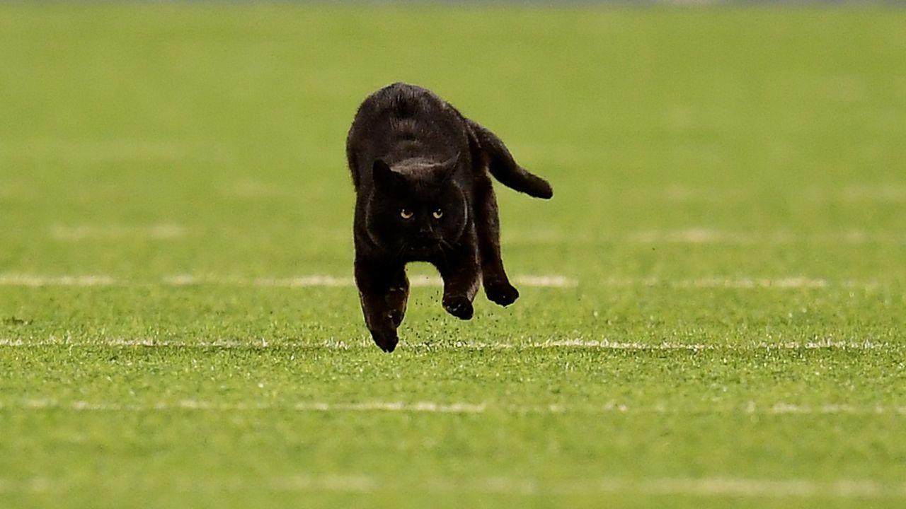Wird ein Tier auf das Feld laufen? - Bildquelle: getty