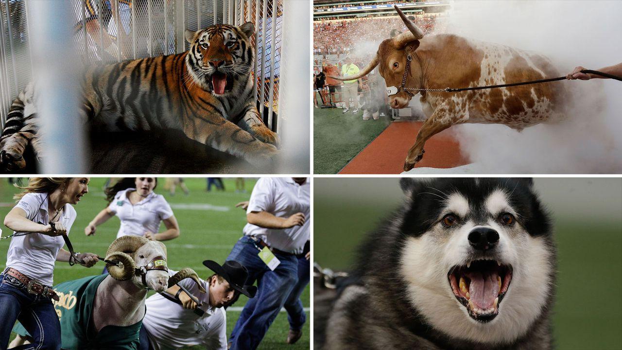 Die lebenden Maskottchen der College-Teams - Bildquelle: Getty Images